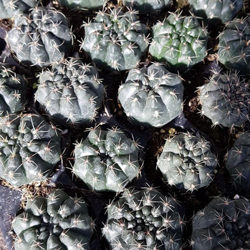 www.succulentgarden.ro